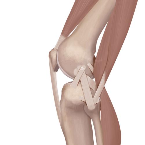 knee tear